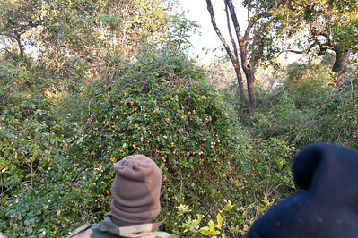 Elephant Safari from Dhikala Forest Rest House