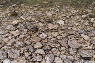 Limestone fossils at Vialmsudd