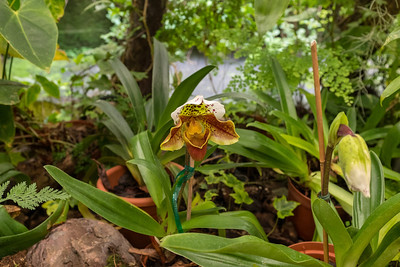 Foundation Josef Pregetter Orchid Garden