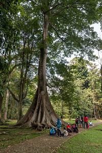 Bogor botanical garden 18 May 2014