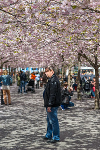 Man under cherry blossom, Stockholm, April 2015