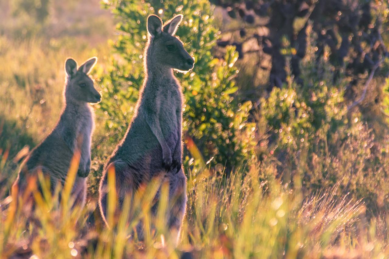 Photo: 2015-03-29-Australia-8.jpg