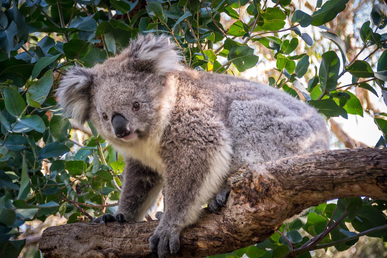 Photo: 2015-03-31-Australia-59.jpg
