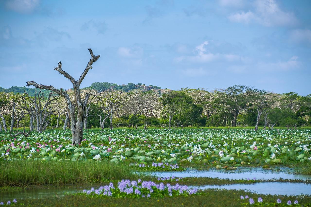 Photo: 2016-01-04-Sri-Lanka-58-Edit.jpg
