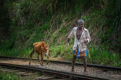2016-01-06-Sri-Lanka-86.jpg