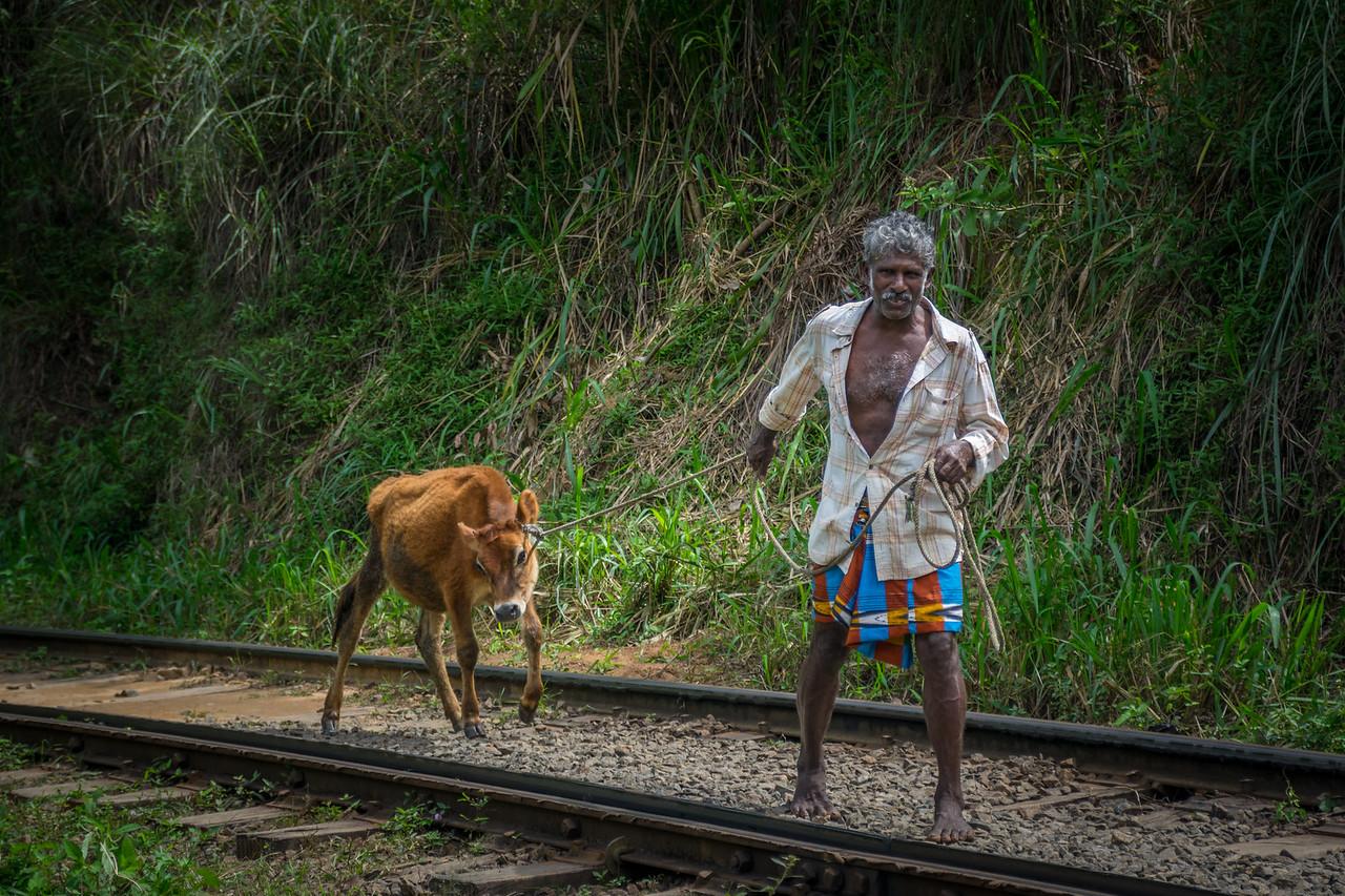 Photo: 2016-01-06-Sri-Lanka-86.jpg