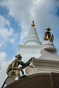 2016-01-12-Sri-Lanka-237.jpg