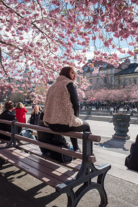 Young woman under cherry blossom, Stockholm, April 2016