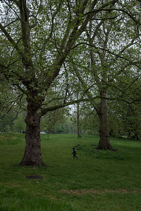 Boy between trees, London, May 2016