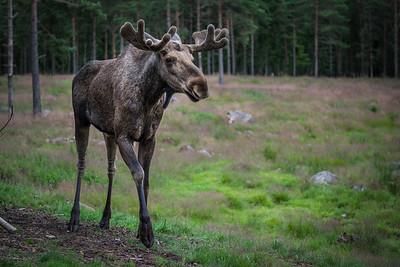 2016-07-11-Sweden-132.jpg