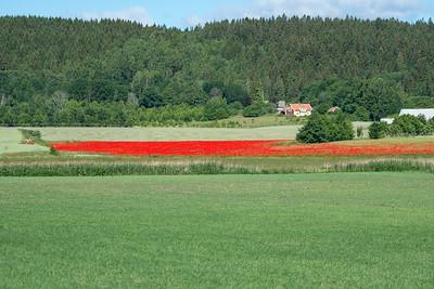 Vallmofält nedanför Omberg