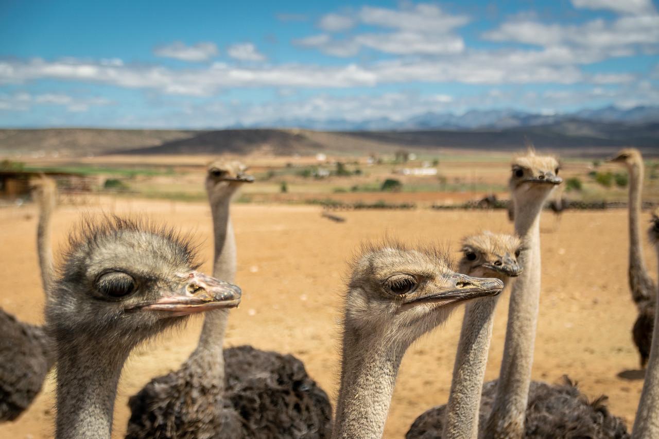 Photo: 2019-01-26-Zuid-Afrika-1110.jpg