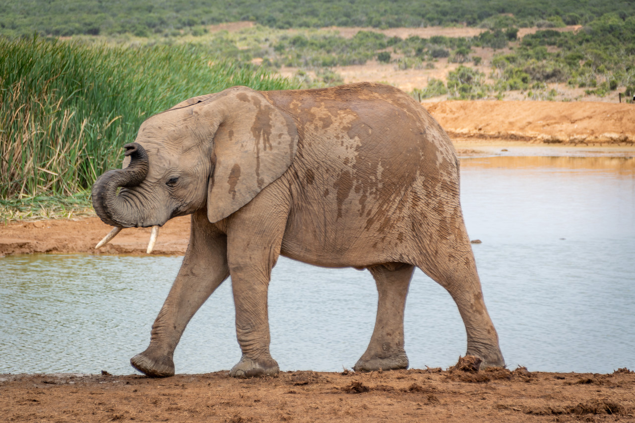 Photo: 2019-01-30-Zuid-Afrika-1649.jpg