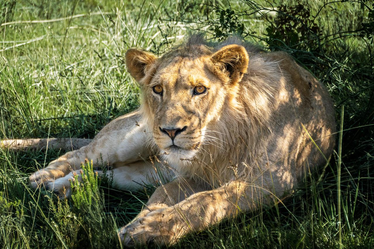 Photo: 2019-02-05-Zuid-Afrika-2626-Edit.jpg