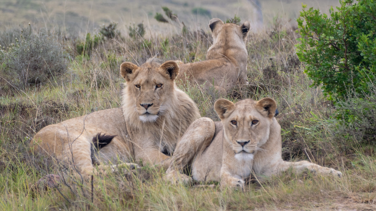 Photo: 2019-02-04-Zuid-Afrika-2317.jpg