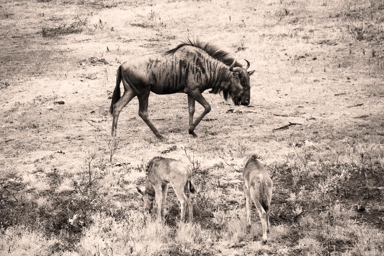 Photo: 2019-02-04-Zuid-Afrika-2226-Edit.jpg