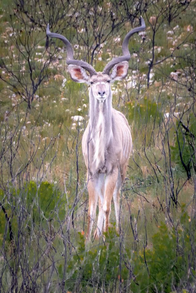 Photo: 2019-02-04-Zuid-Afrika-2251.jpg