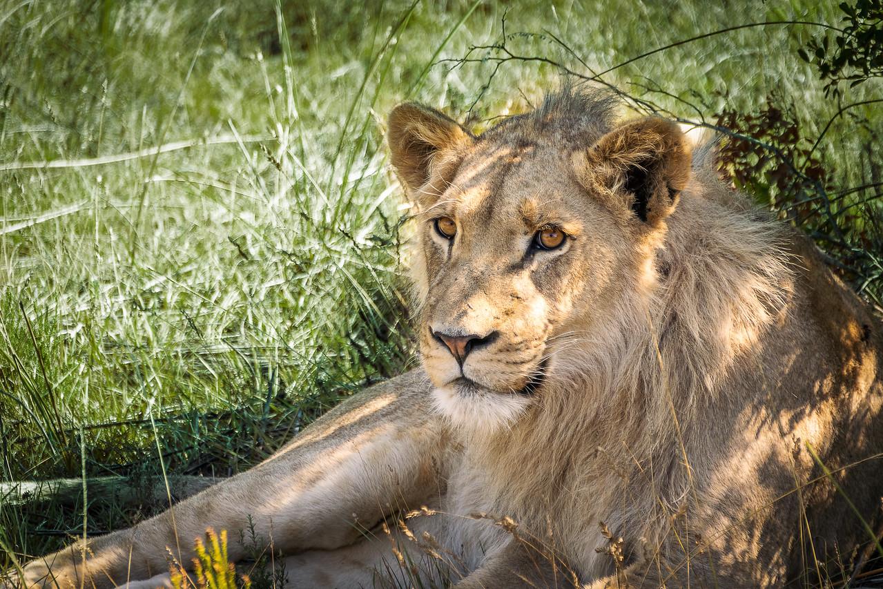 Photo: 2019-02-05-Zuid-Afrika-2610-Edit.jpg