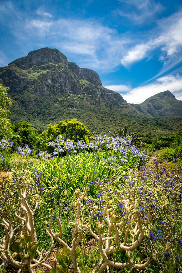 Photo: 2019-01-20-Zuid-Afrika-0509.jpg