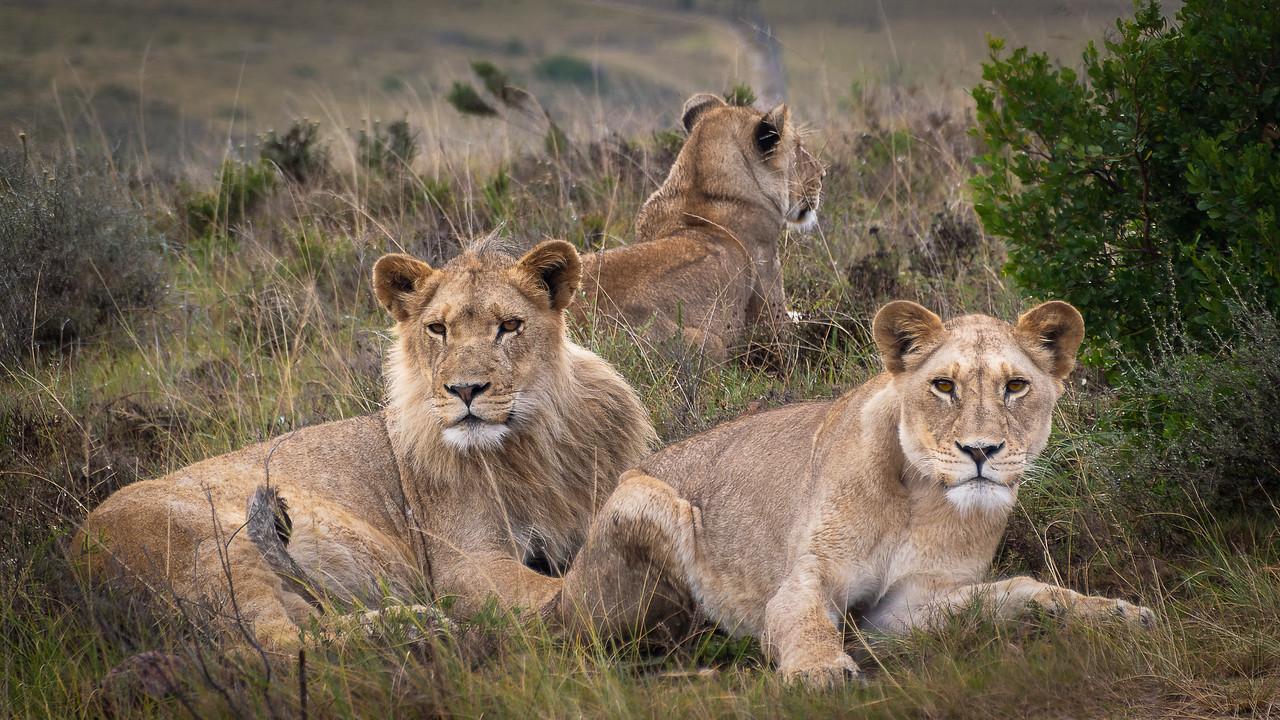 Photo: 2019-02-04-Zuid-Afrika-2312-Edit-Edit.jpg