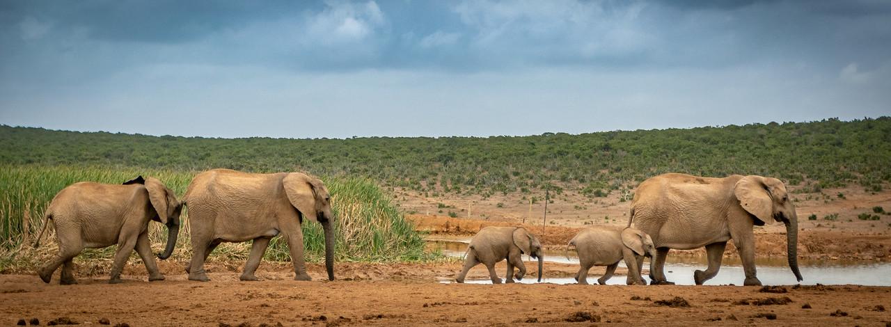 Photo: 2019-01-30-Zuid-Afrika-1513.jpg