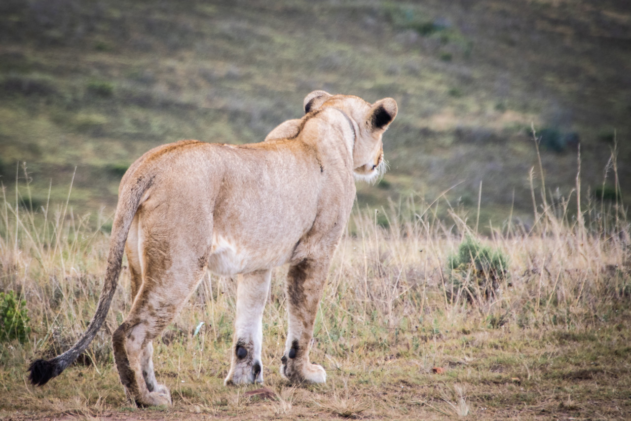 Photo: 2019-02-04-Zuid-Afrika-2340.jpg