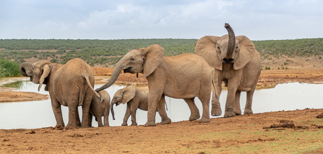 Photo: 2019-01-30-Zuid-Afrika-1544.jpg
