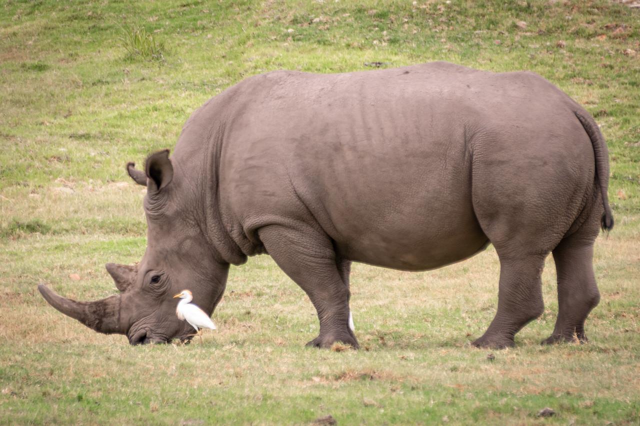Photo: 2019-02-03-Zuid-Afrika-2012.jpg