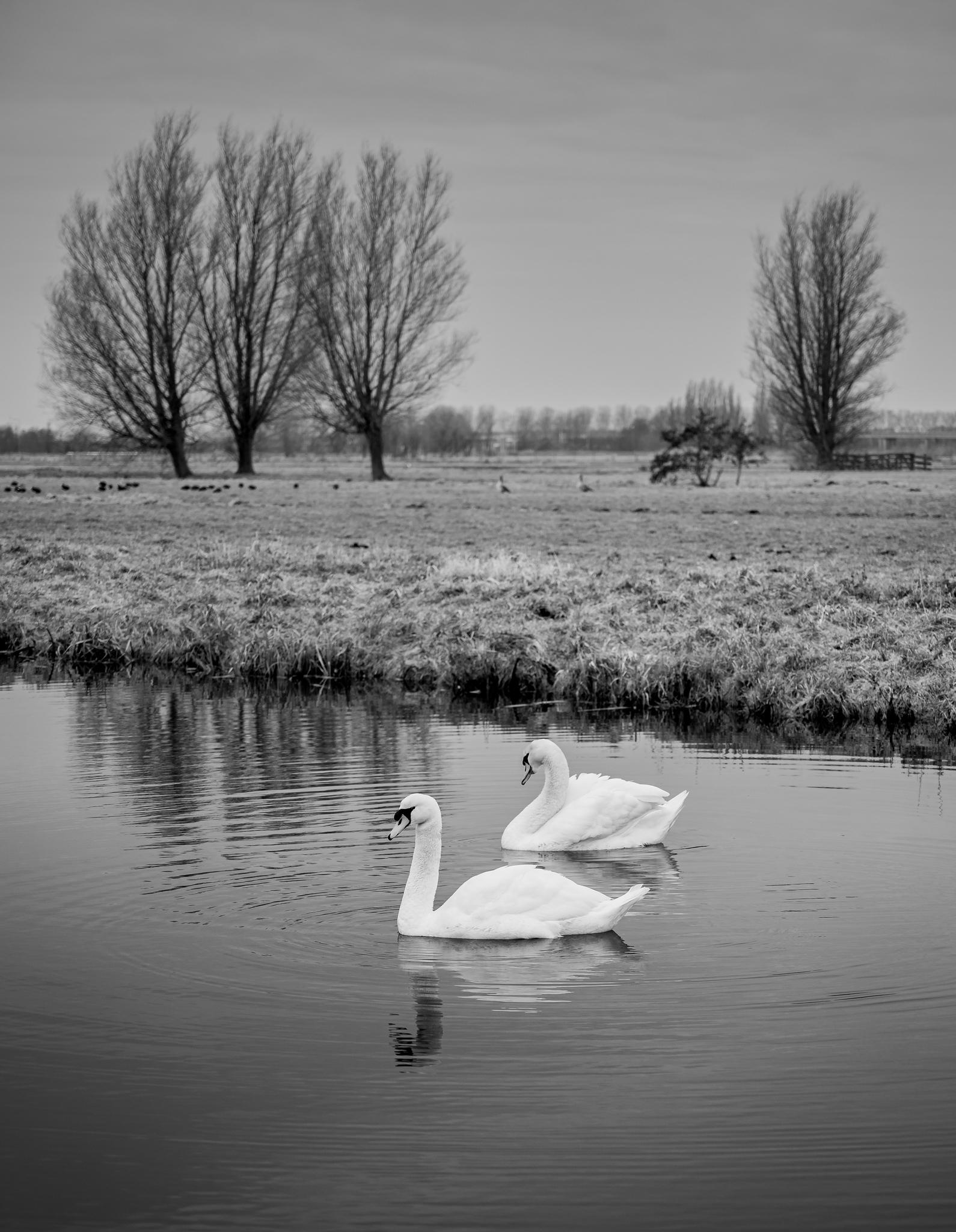 Photo: 2021-01-16-het-weegje-85.jpg