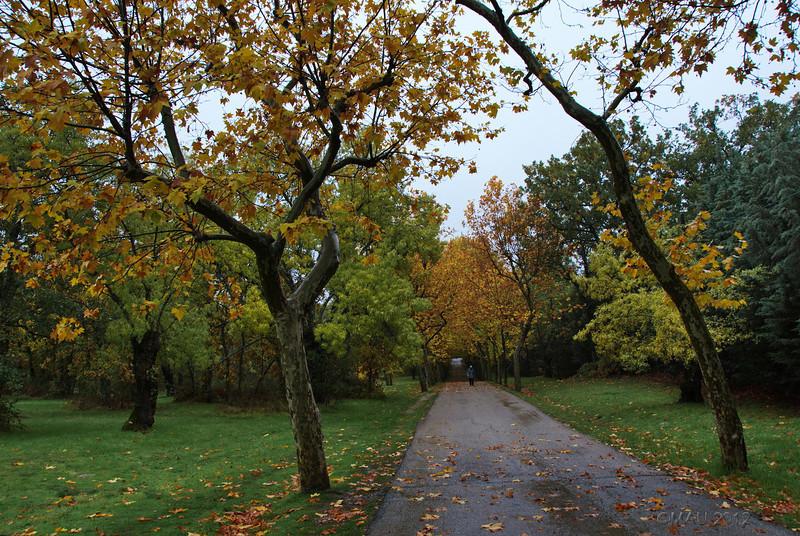Paseo por La Herrería en día de lluvia