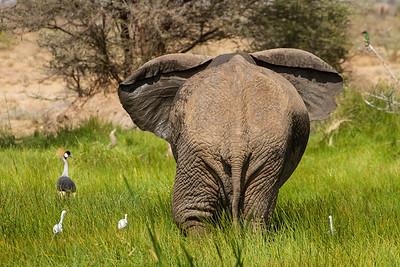 Elephant and crane