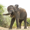 Elephant shaking