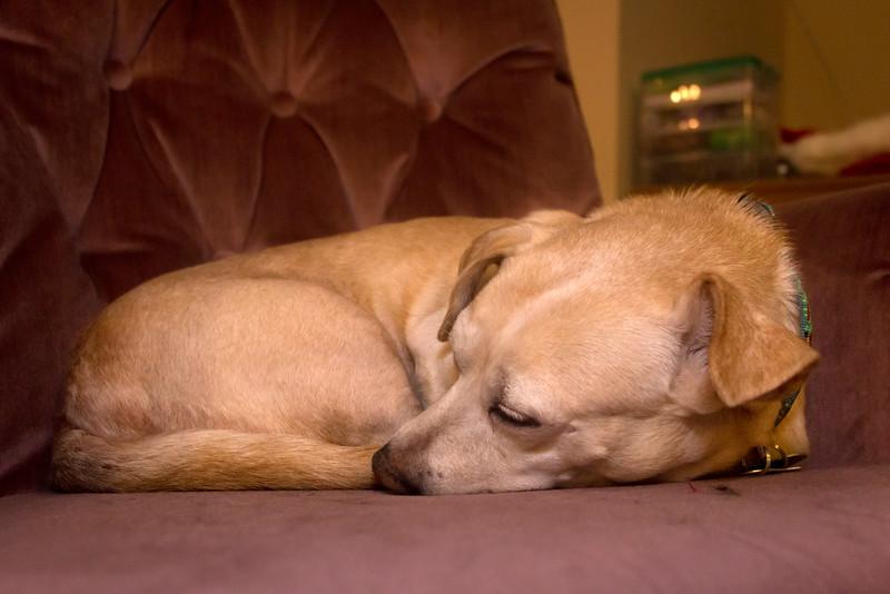 Darcy Mae, So Sleepy.