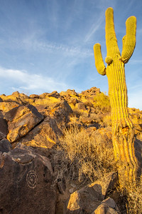 Hohokam spiral and saguaro at sunset, southern Arizona