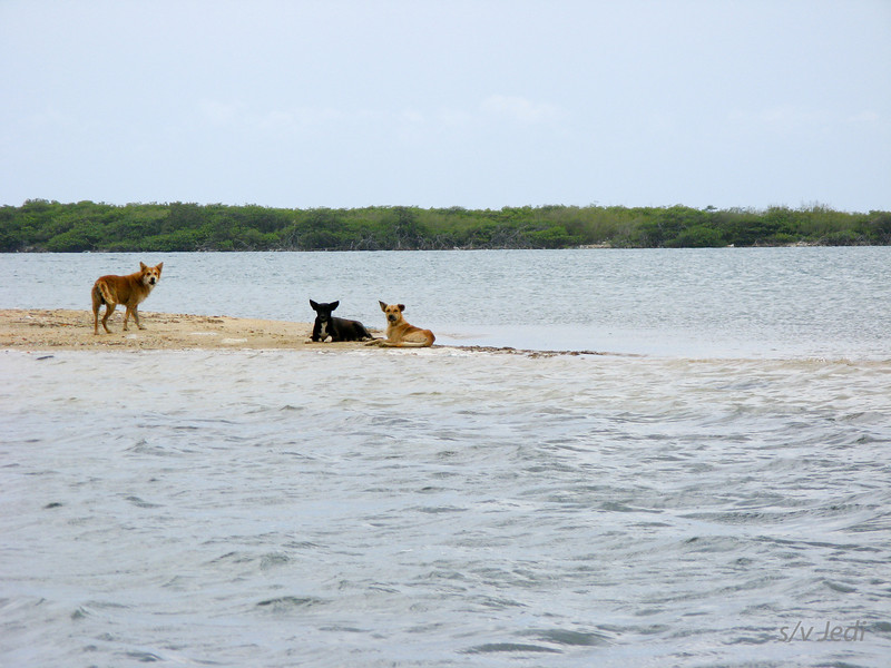 IMG_1048.JPG<br /> Cruising Aruba.<br /> These dogs own this sand spit.