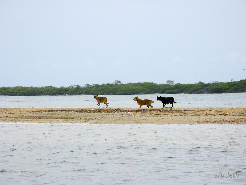 IMG_1049.JPG<br /> Cruising Aruba.<br /> These dogs own this sand spit.