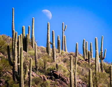 Moon rise in the desert