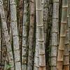 Bambou Pantanal; Brazil