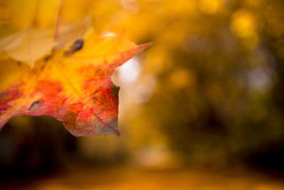Fall's Spike