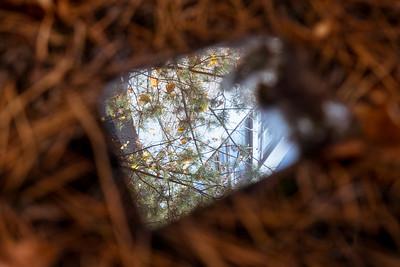 Pripyat' Splinter