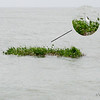 IMG_1219.jpg<br /> Cruising Colombia: Puerto Velero.<br /> Crossing the Rio Magdelena outflow with debris.
