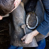 Local Farrier shoeing a horse, here he is removing the old shoe before fitting a new one