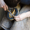 Local Farrier shoeing a horse, here he is nailing on the finished shoe