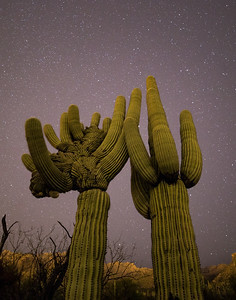 Sabino Canyon Crested With Stars