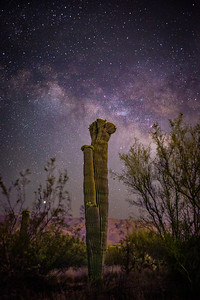 Crested Saguaro with milky way