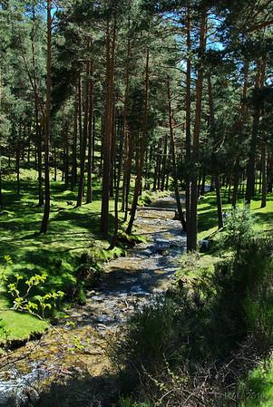 El río que da nombre al valle.<br /> <br /> The river that gives name to the valley.