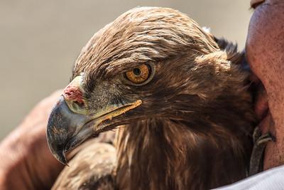 Eagle Bonding