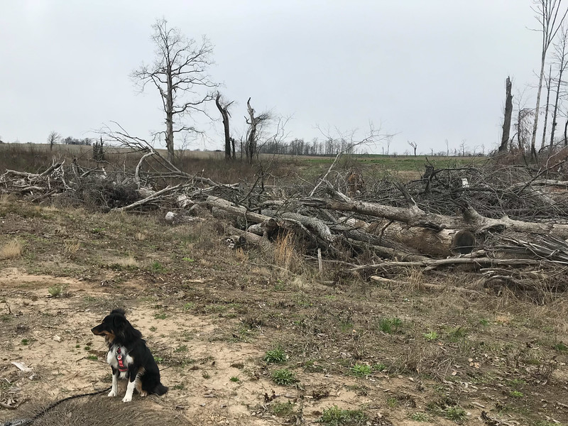 Tornado site, Perryville, MO