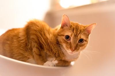Cat Corleone