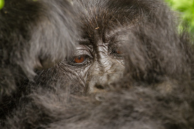 Grooming close up